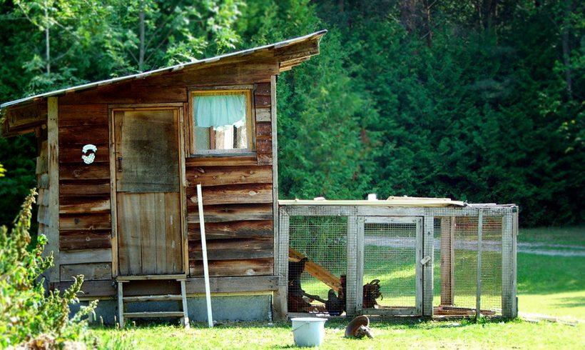 Enclos à poules : mise aux vers et chemins de crêtes