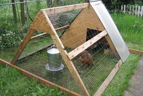 Cage à poule ou mue… protection à ciel ouvert